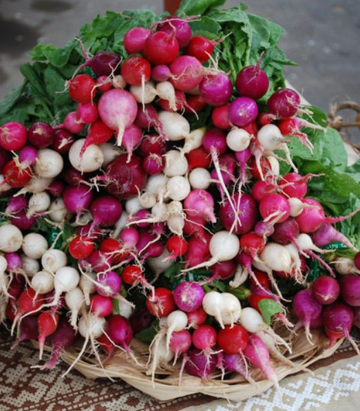 Radishes Presented By Molly & Claude Team Realtors - Royal Lepage - Ottawa Houses & Condos for Sale